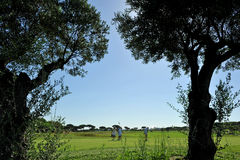 Golf course, group of golfers, Andalusia, Spain Stock Photography