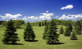 Golf Course Hazard. Many pine trees along the golf course fairway create a hazard for the golfers. Go over or around the trees royalty free stock photography