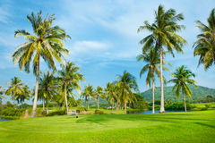 Golf Course, Landscape. With Palms Royalty Free Stock Photos