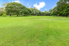 Golf course landscape with tree Royalty Free Stock Photos