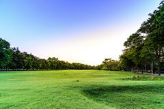 Golf course landscape with tree Stock Image