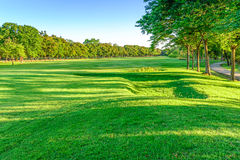 Golf course landscape with tree Stock Photo