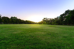 Golf course landscape with tree Stock Photography