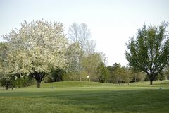 Golf Course Landscaping Royalty Free Stock Images