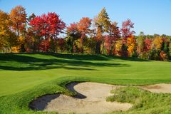 Golf course with maple trees Stock Images