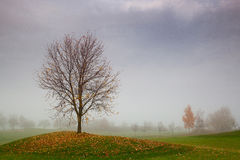 On the golf course in the mist Stock Image