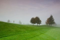 On the golf course in the morning mist Stock Photo