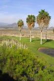 Golf course with mountain view Stock Photos