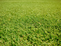 Golf course, natural green grass Stock Image