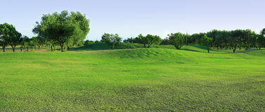Golf-course with olive trees. Fragment of panoramic golf-course with olive trees Stock Photo
