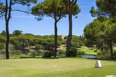 Golf course between pine trees without players Stock Photo