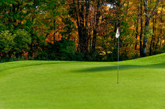 Golf course putting green Royalty Free Stock Images