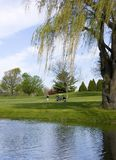 Golf Course Reflections. Scenic Wisconsin golf course reflections of the fairway and one of the many willow trees. The pond is a water source for the golf course Royalty Free Stock Photo