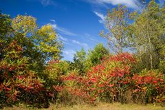 Golf Course Scenic Out Of Bounds. Rural Wisconsin Golf Course out of bounds area in the fall. The colors of hardwoods and sumac along with a blue sky. Wow Stock Photos
