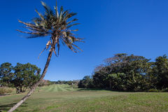 Golf Course Selborne Royalty Free Stock Image