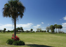 Golf Course Series. Florida golf course greens and fairways in spring Stock Images