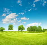 Golf course. Spring field with green grass and blue sky Royalty Free Stock Image
