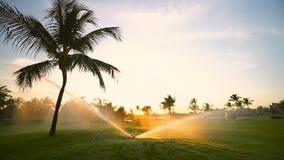 Golf course sprinkler on fairway during golden sunset stock video