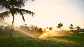 Golf course sprinkler on fairway during golden sunset stock footage