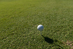 Golf course on sunny day Royalty Free Stock Photo