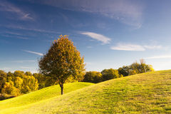 Golf course at sunrise. On the golf course in autumn in Prague Stock Photo