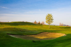 On a golf course at sunset Royalty Free Stock Photo