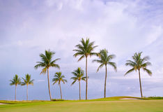 Golf course sunset with tropical palm trees Stock Photos
