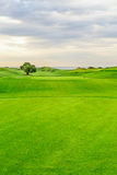 Golf course with a tree Royalty Free Stock Images