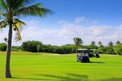 Golf course tropical palm trees in Mexico Stock Photos