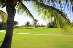 Golf course tropical palm trees in Mexico Stock Image