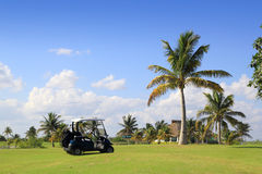 Golf course tropical palm trees in Mexico Royalty Free Stock Photography