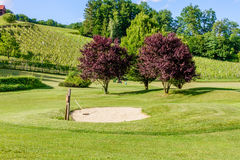 Golf course in the vineyards with bunker in front. Golf course amon in Olimje, Slovenia Royalty Free Stock Photo