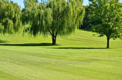 Golf course. Weeping willow tree adorns the course at the golf club stock photography