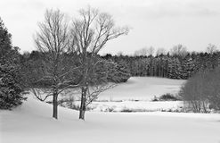Golf Course in Winter. Ontario golf course scene with meandering creek in winter after a snow squall Royalty Free Stock Images