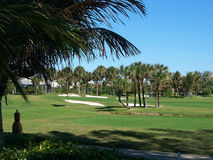 Golf Course Winter in Florida. The palms, greens, and sand traps of a tropical winter morning golf course view Royalty Free Stock Images