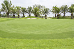 Golf courses  , green grass Stock Image