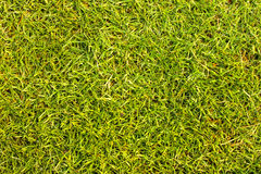 Golf Courses green lawn. Golf Courses apply design textures and background Royalty Free Stock Photo