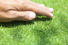Golf Courses green lawn. Green grass background natural grass golf course Stock Photos