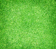 Golf Courses green lawn. Green grass background natural grass golf course Royalty Free Stock Image