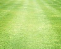 Golf Courses green lawn Stock Photos