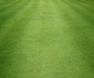 Golf Courses green lawn Royalty Free Stock Photo