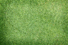Golf Courses green lawn. Pattern textured background Royalty Free Stock Image