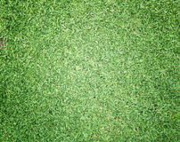 Golf Courses green lawn. Pattern textured background Stock Image