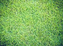 Golf Courses green lawn pattern textured background Royalty Free Stock Image