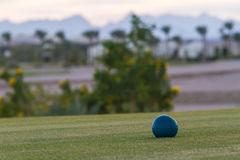 Golf courses among the palms. Golf courses among palm trees look particularly attractive Stock Images