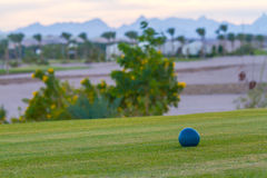 Golf courses among the palms. Golf courses among palm trees look particularly attractive Stock Photo
