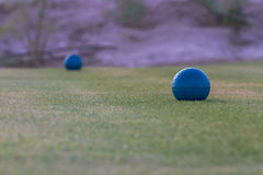 Golf courses among the palms. Golf courses among palm trees look particularly attractive Stock Photography