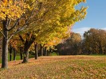 Golf dans des arbres d'automne sur le parcours ouvert Photo stock
