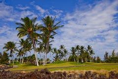 golf di corso tropicale Immagine Stock