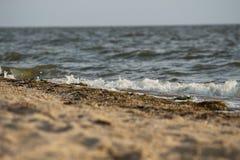 Golf die op de zandige kust van de Zwarte Zee, de Oekraïne rollen Stock Foto